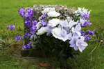Image of flowers on a grave
